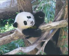 BAO BAO The Panda Bear Cub  #1