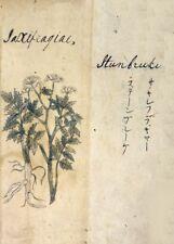 Saxifraga - Rockfoils 'A Japanese Herbal' 17th Century Plant Anatomy Poster