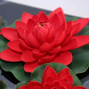 USA SELLER 12 Seeds Water Lily Ruby Red Lotus Flowers Garden Plants Ponds