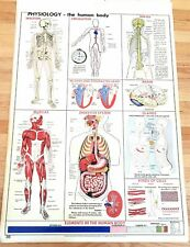 Original 1955 Science Pull Down School Chart of Physiology Human Body 28.5 x 42