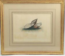 Fine Gold Leaf Framed Antique Hand Colored Sea Shell Conchology Print 105 NR KPB