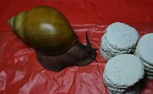 Giant African Land Snails GALS Calci Cookies /dry leaves seeds calcium/ 0,100kg
