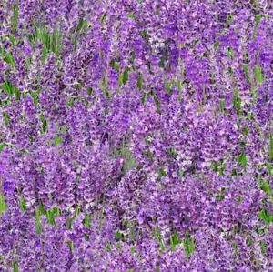 Landscape Medley Fabric   Elizabeth's Studio Lavender Floral   By the Yard