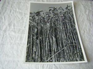 Black & White Art Photo, Wheat Field