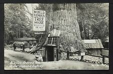 CALIFORNIA BIG TREES10-At Lilley Redwood Park on the Redvood Highiway Real Photo