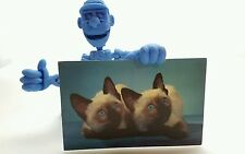 WE ARE SIAMESE SISTERS Blue Eyes KITTENS Vintage Postcard Cats