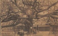 The Big Oak Tree, South Jacksonville, Florida c1910s Vintage Postcard