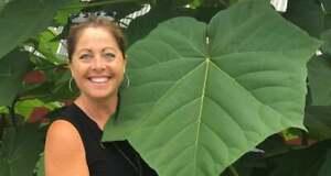 100 Empress Tree Seeds - Fast Growing Hardwood