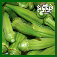 Cowhorn Okra Seeds - 25 SEEDS SAME DAY SHIPPING
