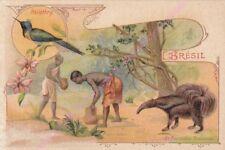 Chromo Mocha Leroux le Monde of Drill Bits Brazil the Anteater Heliothrix