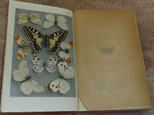 1916 Butterflies and Moths 12 colour plates Furneaux Antiquarian Natural History