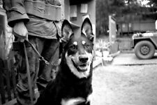 Vietnam 1970 - Guard Dog On Duty Chu Lai