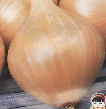 2000 Seeds Onion Globy Heirloom Vegetable Seed