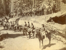 """TROOP I 15US CAVALRY ON TRUNK OF """"FALLEN MONARCH"""" MARIPOSA GROVE CAL STEREOVIEW"""