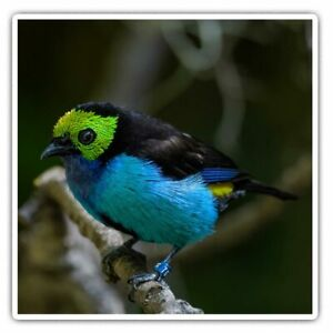 2 x Square Stickers 10 cm - Paradise Tanager Tropical Blue Bird Cool Gift #16041