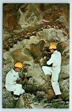 Vintage Postcard Dinosaur National Monument Utah Colorado Diplodocus