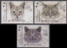 SLOVENIA 2020 CATS CHATS KATZE GATTI GATOS [#2001]