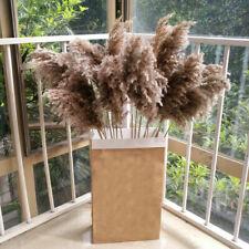 15PCS Dried Plants Pampas Grass Natural Phragmites Home Wedding Flower Bunch