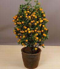 HEIRLOOM LEMON BONSAI FRUIT- VEG TREE-PLANT SEEDS (5 Seeds)