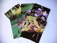 20 Postkarten  5 verschiedene Orchideen