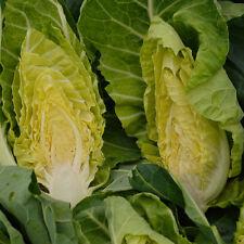 Vegetales-Kings Semillas-pictórica Packet-Coles-Holland fines de invierno