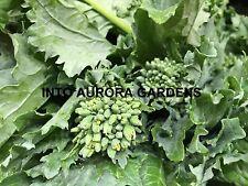 50 Broccoli Rabe Rapini Organic Seeds Cima Di Rapa