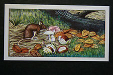 Woodmouse & Mushrooms  Illustrated Colour Card  # VGC / EXC