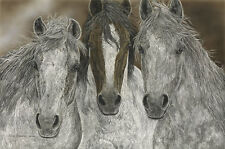 The Misfits by Judy Larson S/N Giclee Canvas