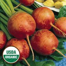 100 Organic Golden Detroit Beet Seeds - Everwilde Farms Mylar Seed Packet