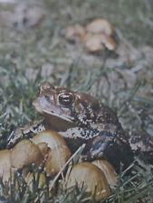 "Frog Toad Mushroom Animal School Teacher Poster Indian Lake 1972 24"" x 18"""