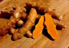 Turmeric Root, Organic, Fresh and grown In Hawaii. Free Shipping. 1/2 Pound.