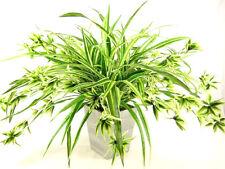 Grandi VASI Seta Artificiale SPIDER IMPIANTO con i canali di alimentazione (Chlorophytum comosum)