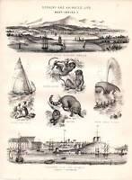 1877 Stampa Scenery West Indies Bernuda Dock Jamaica Ecc.