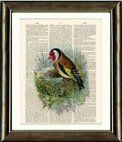 Antique Book page Art Print - The Beautiful Goldfinch Bird