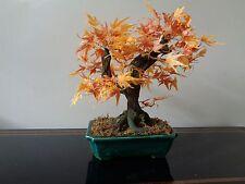 Maple Bonsai Silk Plant 16-Inch