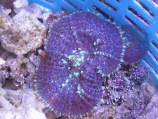Corales hongo
