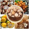 New Fresh Organic Whole Areca Catechu (Betel Nut) from Sri Lanka