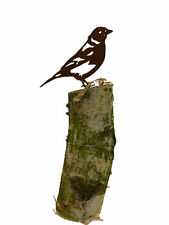 Vogel Buchfink (Rostdeko)