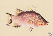 "Gyotaku Fish Rubbing - ""Pink Hog"" - Hog Fish"
