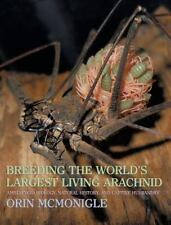 Breeding the World's Largest Living Arachnid : Amblypygid (Whipspider) Biolog...