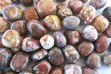 Birds Eye Rhyolite One Tumbled Stone 20mm Healing Crystals by Cisco Traders