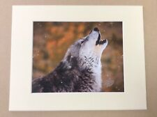 """2007 Original STEVE HINCH """"Call Of The Wild"""" Wolf Photograph, Hand Signed"""