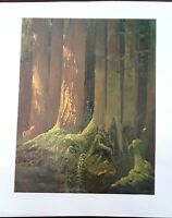 "Frances Lee Jaques""DEER IN RAIN FOREST""1940-Wildlife Art Print-11.5x10"