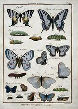 1794 Pierre André Latreille - Quarto copper engraving - European Butterflies