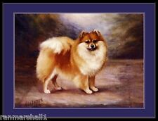 English Print Pomeranian Puppy Dog Puppies Dogs Vintage Poster Art Picture