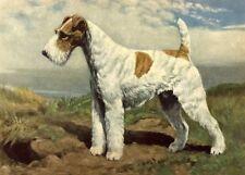 Wire Fox Terrier - Dog Art Print - Megargee Matted