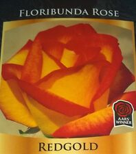 REDGOLD Rose Bush Flowers Live Plant Bare Root Roses ketchup mustard yellow red