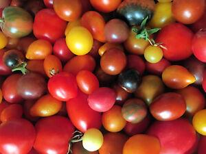 Bunte Tomaten - Mischung * 25 Sorten * 50 Samen * frisch *