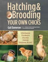 Hatching & Brooding Your Own Chicks : Chickens, Turkeys, Ducks, Geese, Guinea...