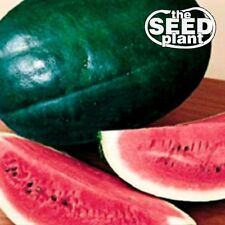 Black Diamond Watermelon Seeds 20 SEEDS-SAME DAY SHIPPING